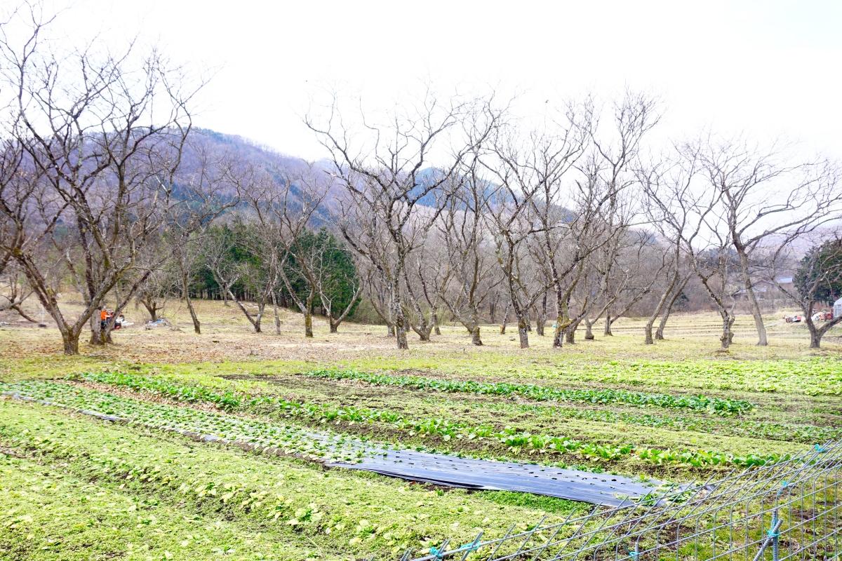 No-ka-No Resutoran Farm