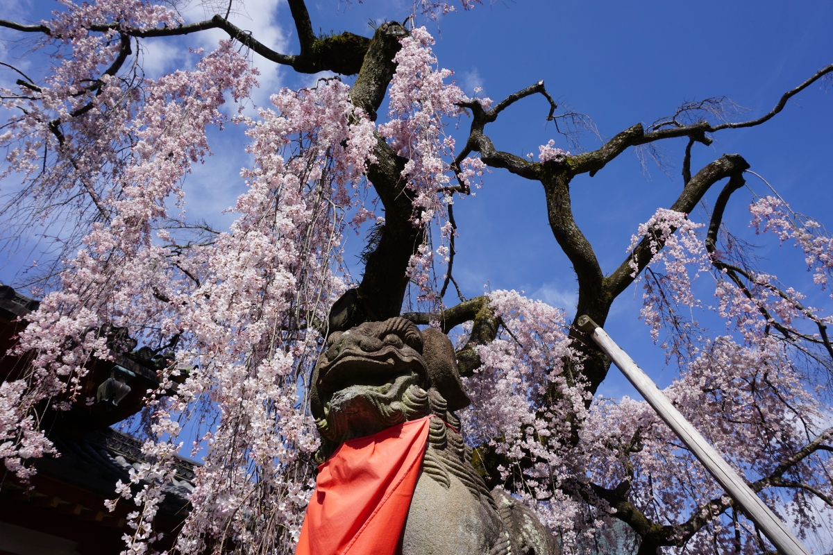 Himuro Shrine in spring