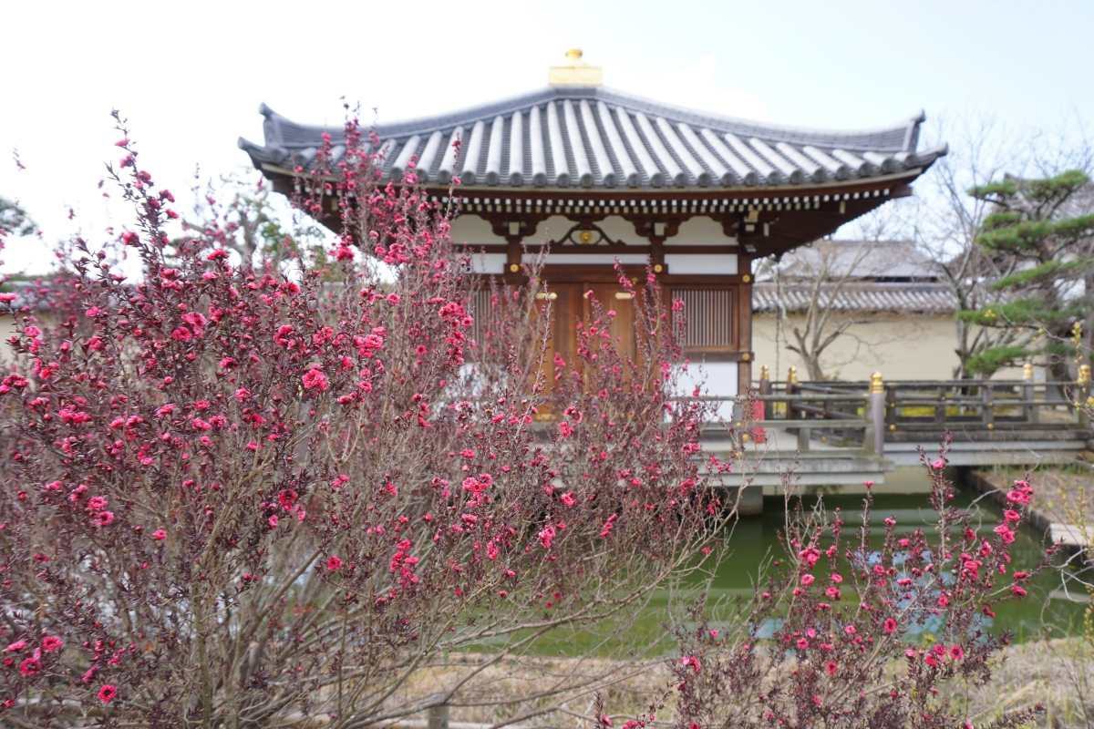 One of the buildings in Hokkeji Temple