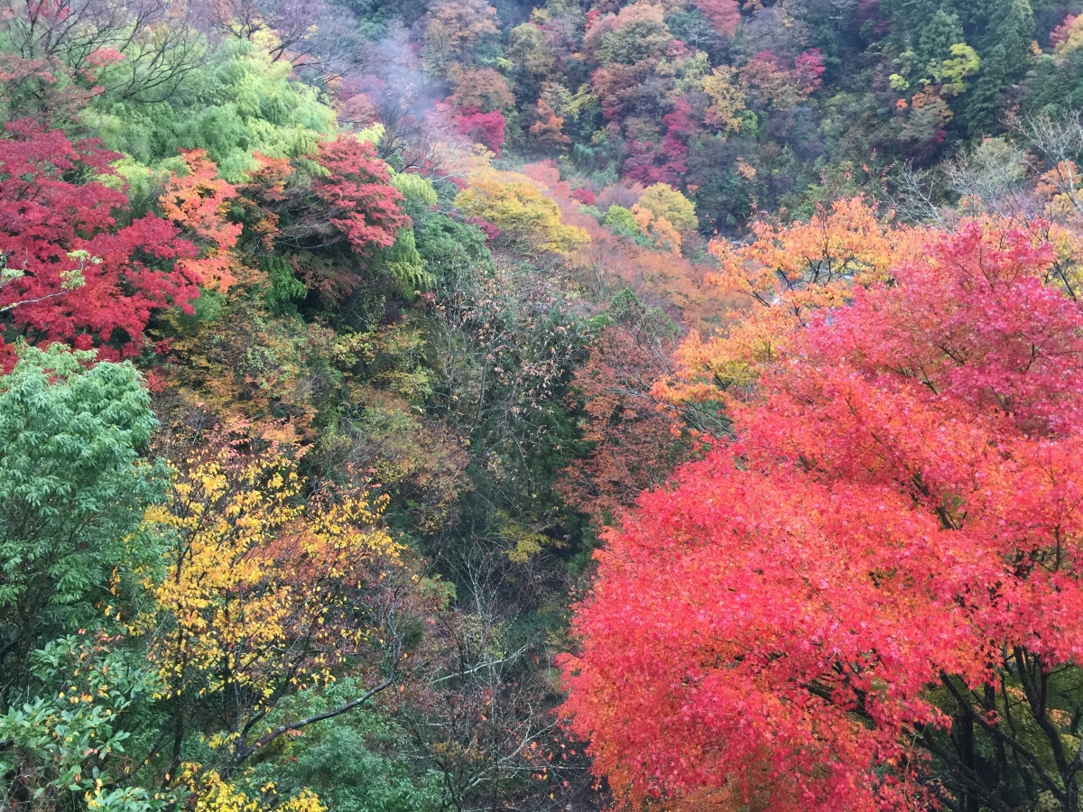 colors of Hakone