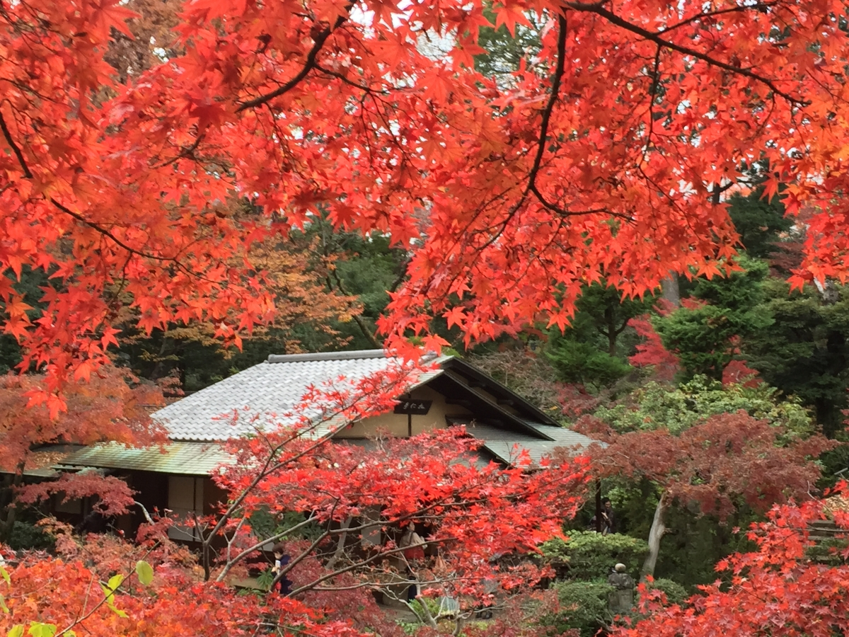maple trees and teahouse