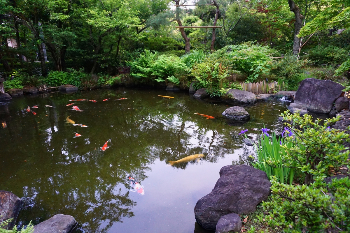 pond at jinya
