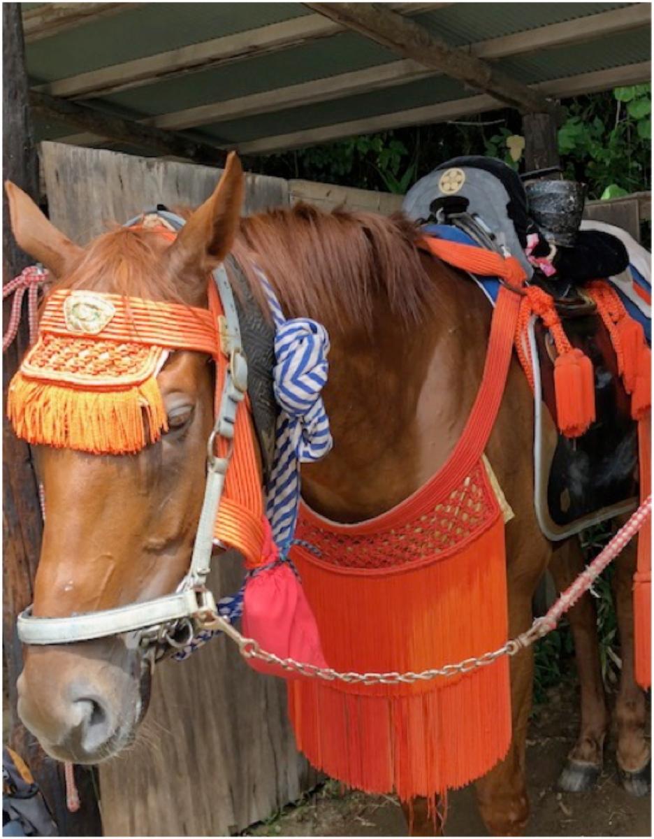 Nomaoi horse