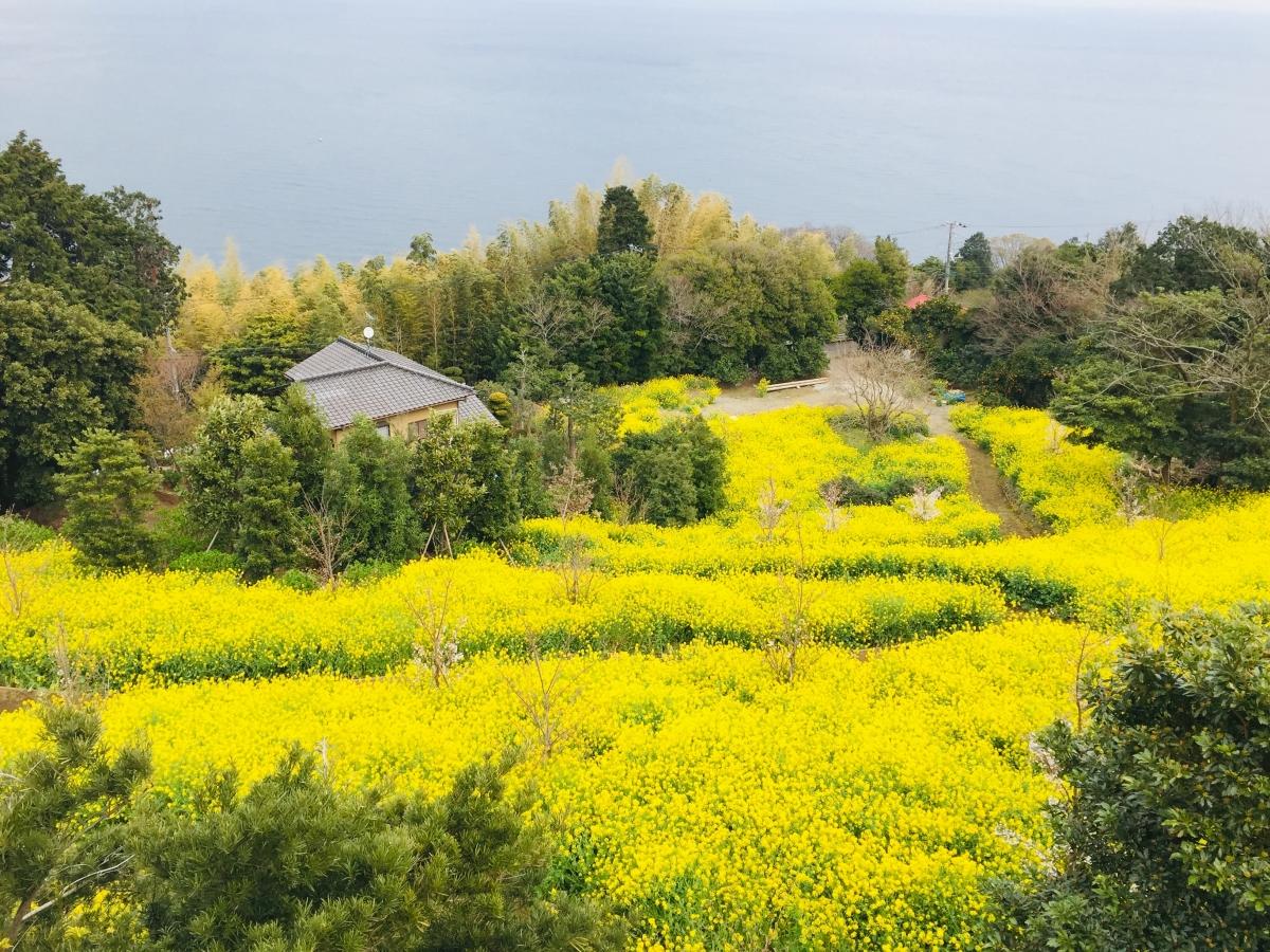 nanohana at yugawara